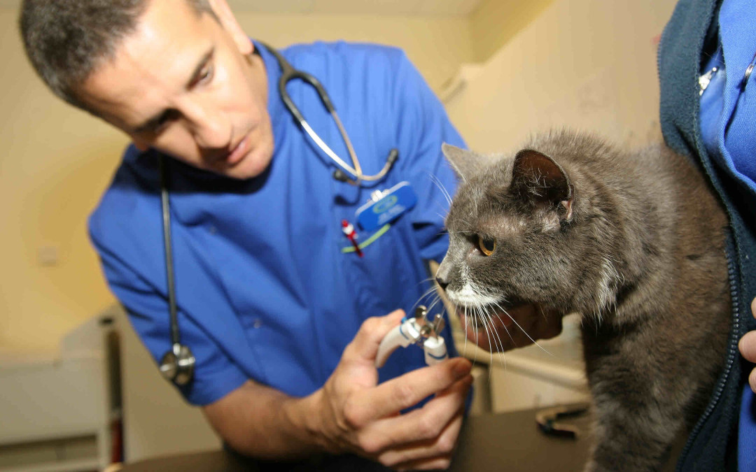 Pet Business Marketing Case Study